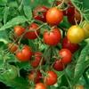 fruit_veg_1