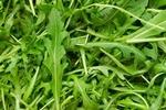 green_leaf_veg_3